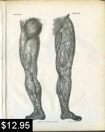 leg anatomy print