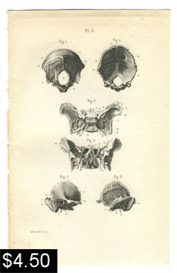 Anatomy Print Skull Bones | Photos and Images | Vintage