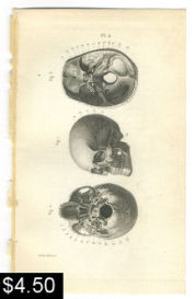 skull anatomy print