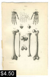 hand leg anatomy print