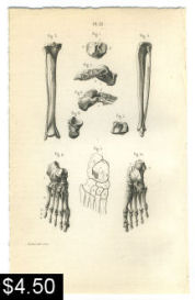 bones of the foot anatomy print