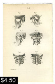 cervical spine tmj anatomy print