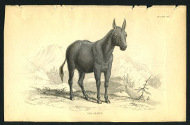 vintage 1838 horse print