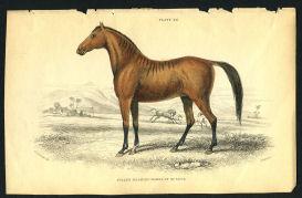 vintage horse print 1838