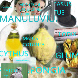 imaginum vocabularium latinum - 2012 edition - 3300 labelled images for latin vocabulary building