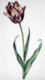 Oswald : Airs for the seasons - Tulip (Kbd) : Printable cover page | Music | Classical